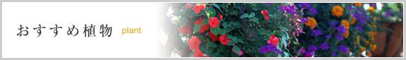 おすすめ植物